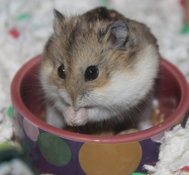 Rest in peace, Flint the hamster ♥ Img_8935