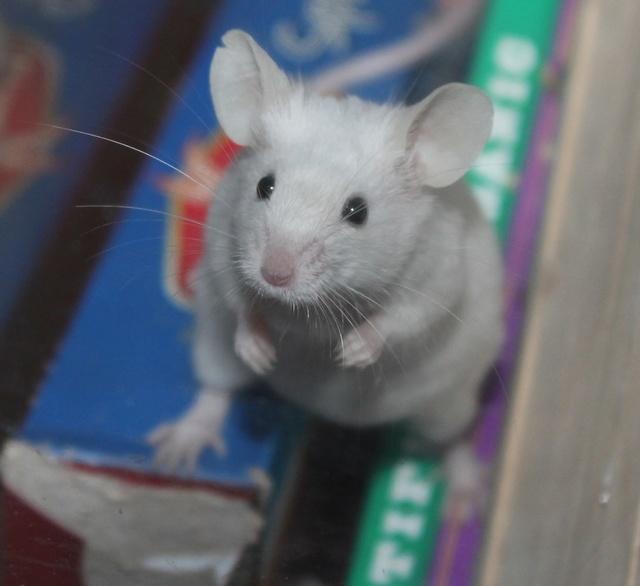 PEW mice ears Img_9021