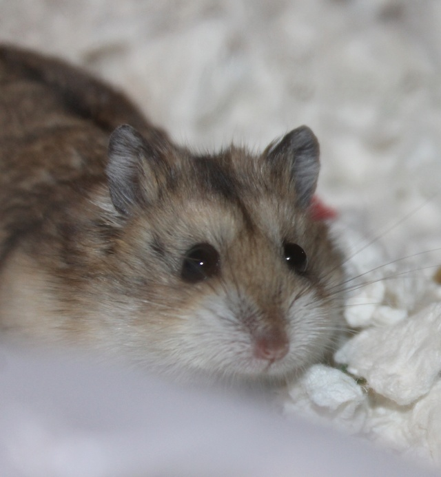 Rest in peace, Flint the hamster ♥ Img_9022