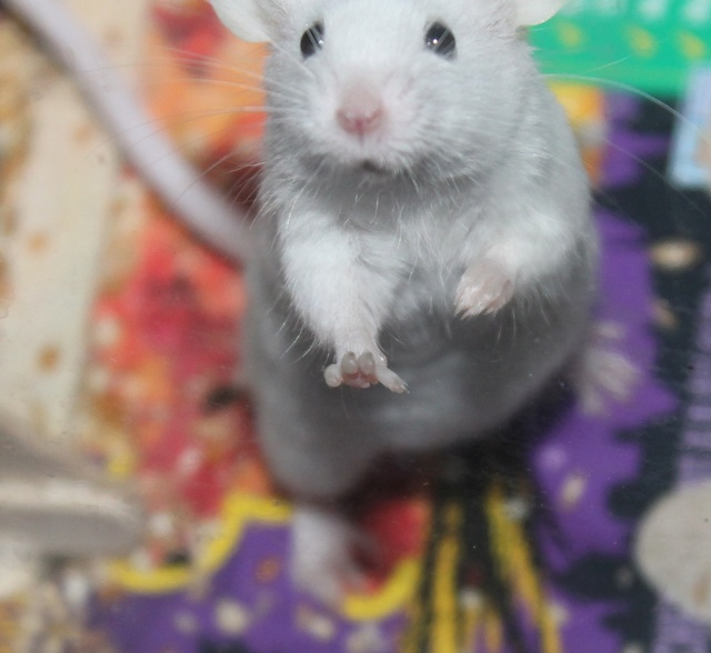 A boatload of mousie pics! *pic heavy* Img_9023