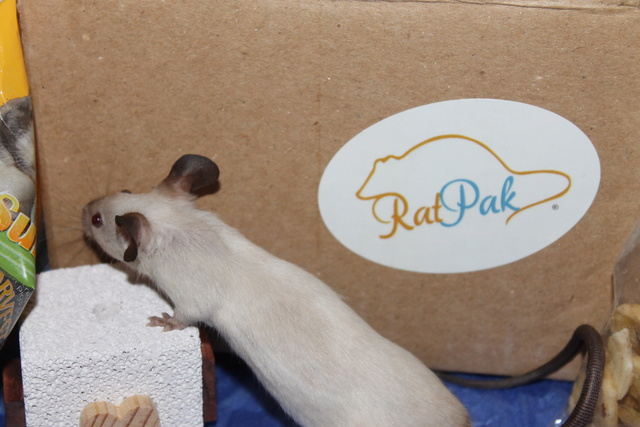 RatPak review Img_9221