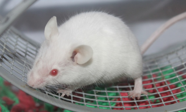 I adopted a one-eyed mouse! Img_9319