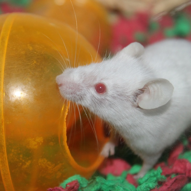 I adopted a one-eyed mouse! Img_9320