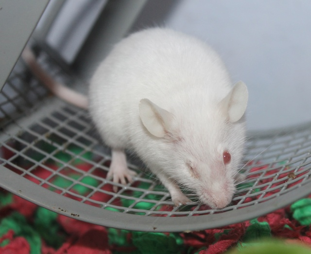 I adopted a one-eyed mouse! Img_9321