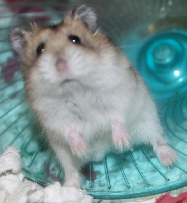 Rest in peace, Flint the hamster ♥ Img_9323