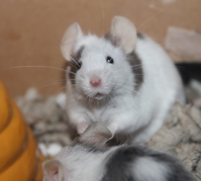 A boatload of mousie pics! *pic heavy* Img_9429