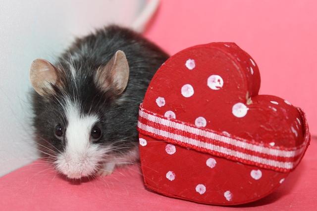 VOTE -- Valentine's Day Photo Contest (Poll Added) Img_9811