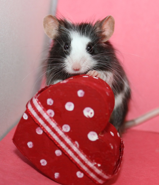 My Valentine's day photos Img_9816