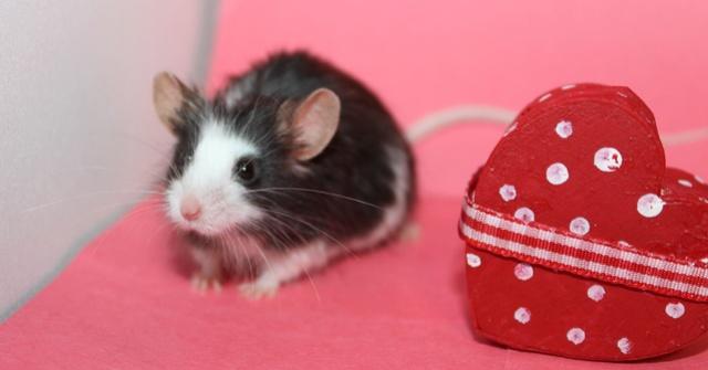My Valentine's day photos Img_9818