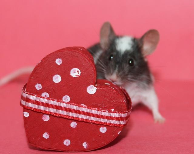 My Valentine's day photos Img_9914