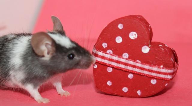 My Valentine's day photos Img_9915