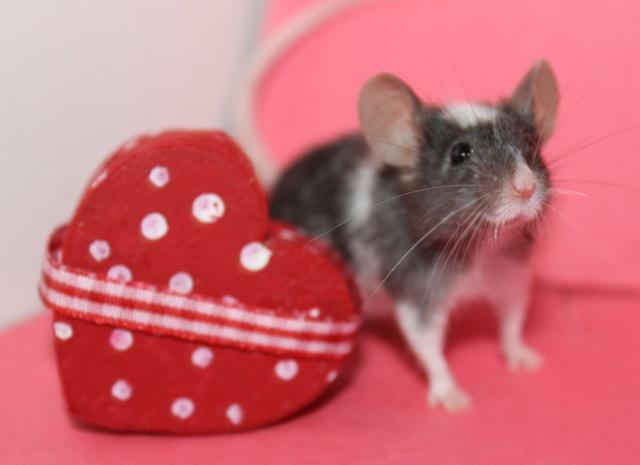 My Valentine's day photos Img_9916