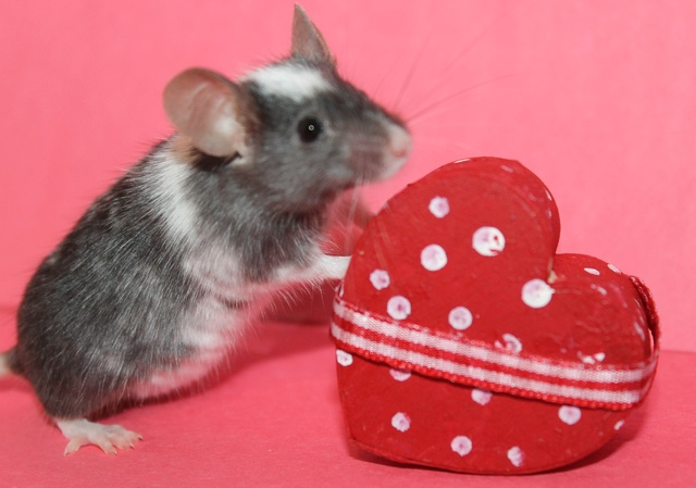 My Valentine's day photos Img_9917