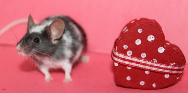 My Valentine's day photos Img_9918