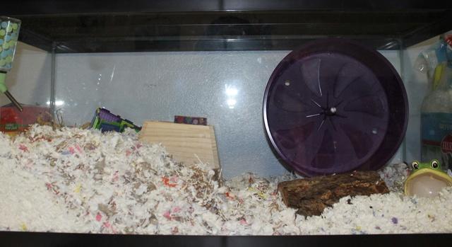 Syrian Hamster set ups Mice_h11