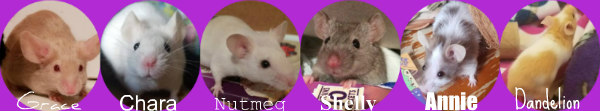 Need to rehome my mice Mouse_12