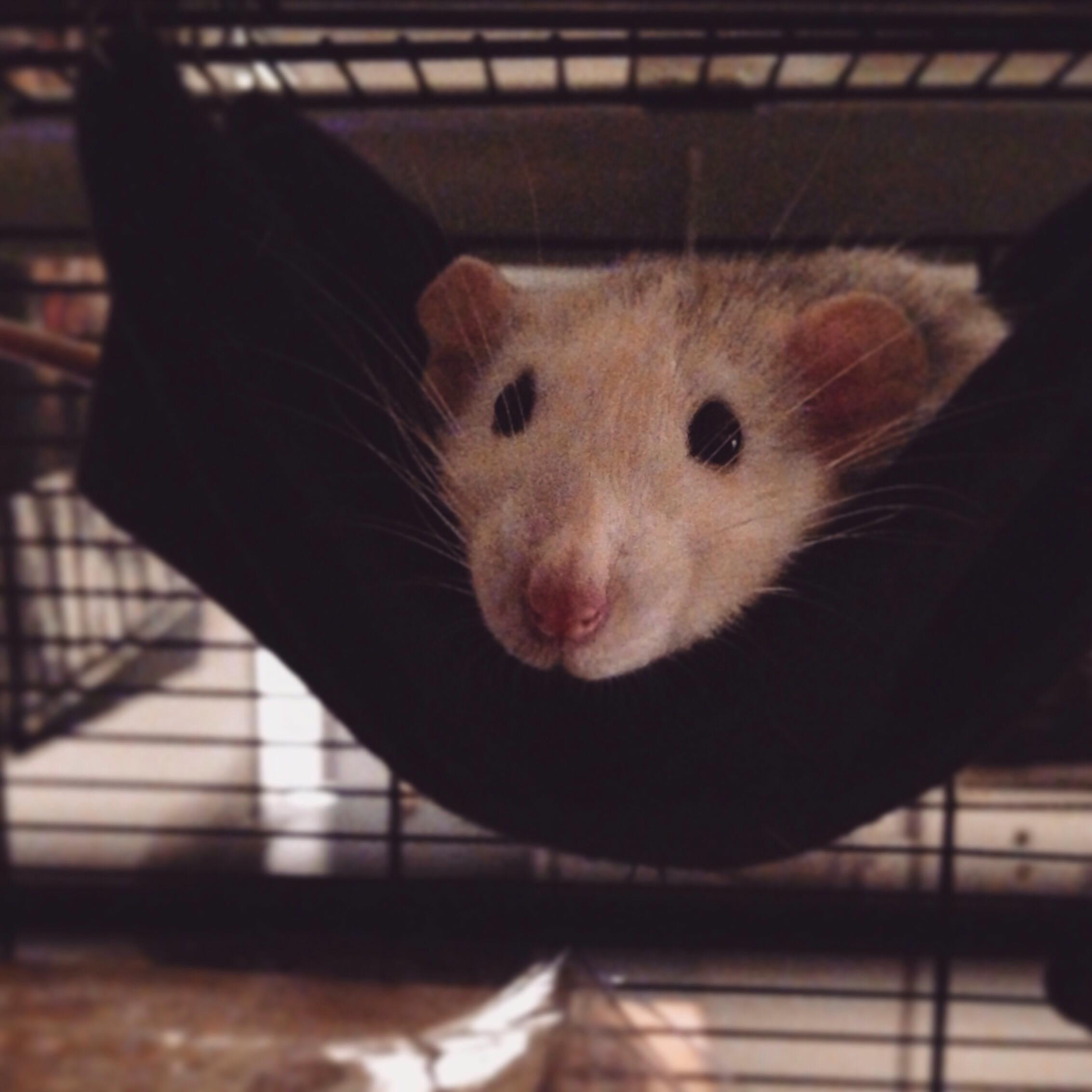 Les 3 p'tits rats 33778910