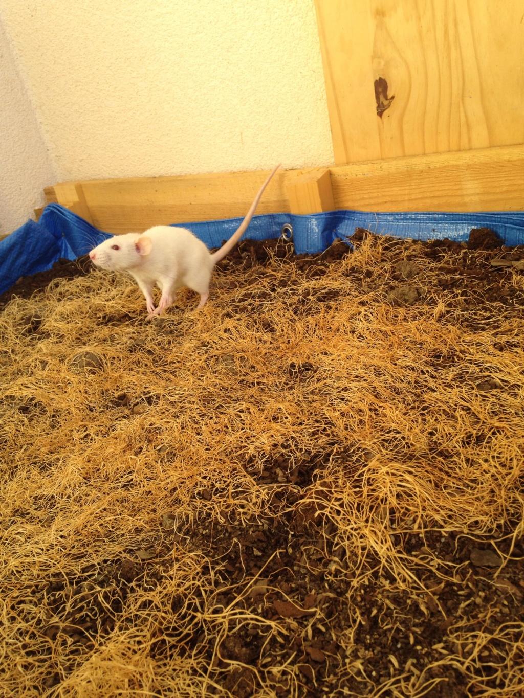 Les 3 p'tits rats 40188010