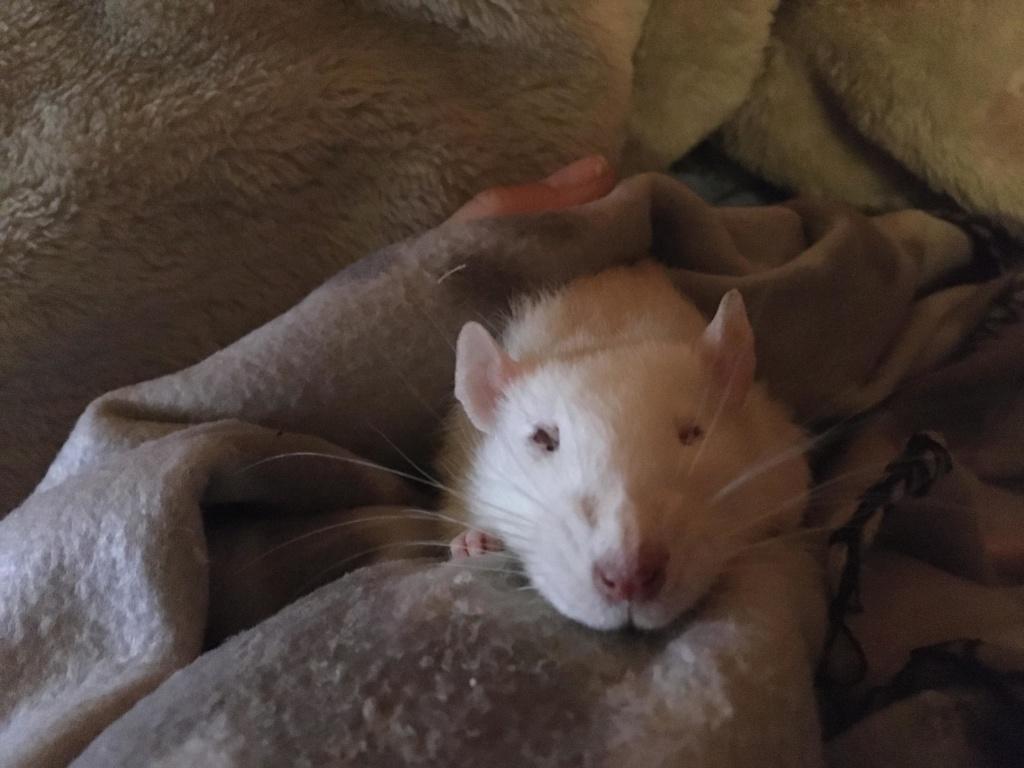 Les 3 p'tits rats - Page 16 88321510