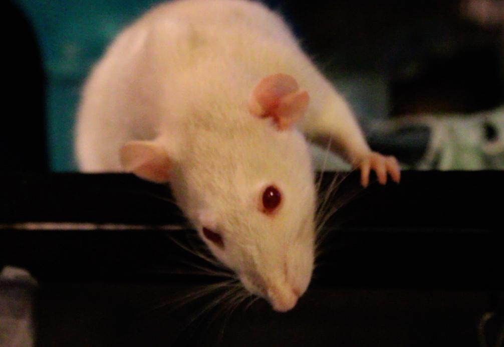 Les 3 p'tits rats - Page 16 Captur11