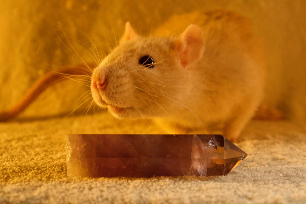 Les 3 p'tits rats - Page 17 Captur13