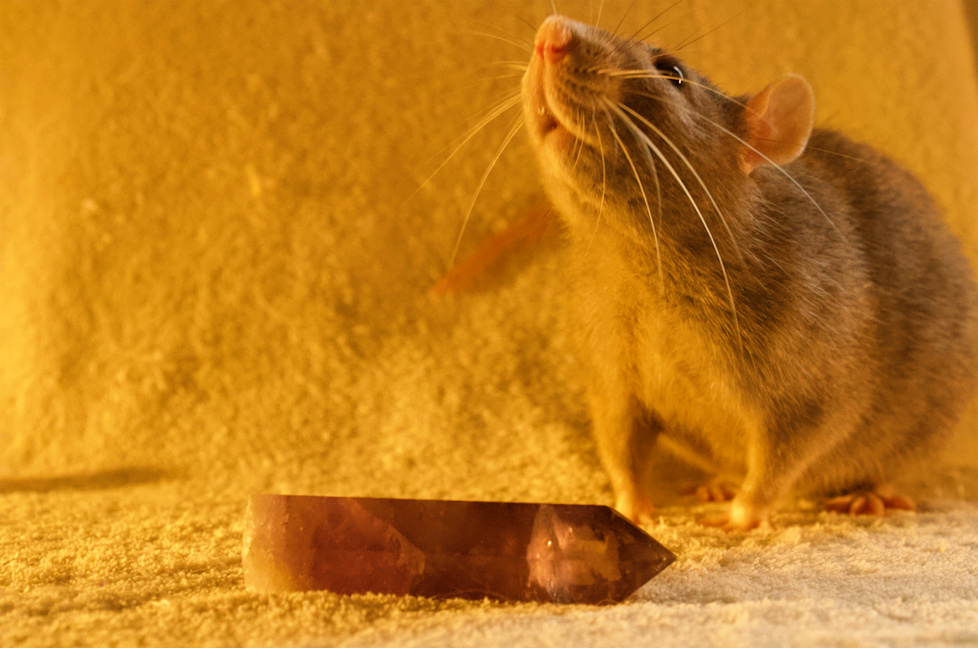 Les 3 p'tits rats - Page 17 Captur15
