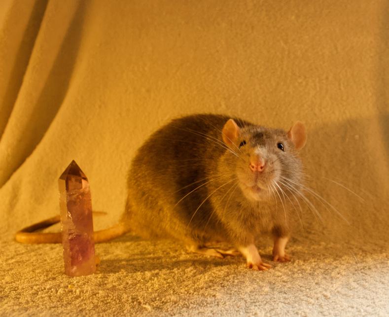 Les 3 p'tits rats - Page 17 Captur16