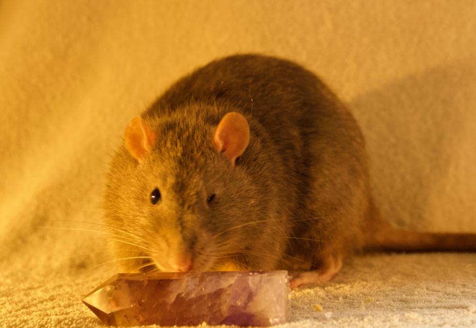 Les 3 p'tits rats - Page 17 Captur17