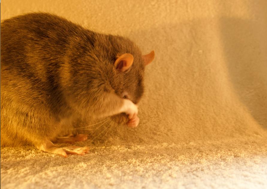 Les 3 p'tits rats - Page 17 Captur18