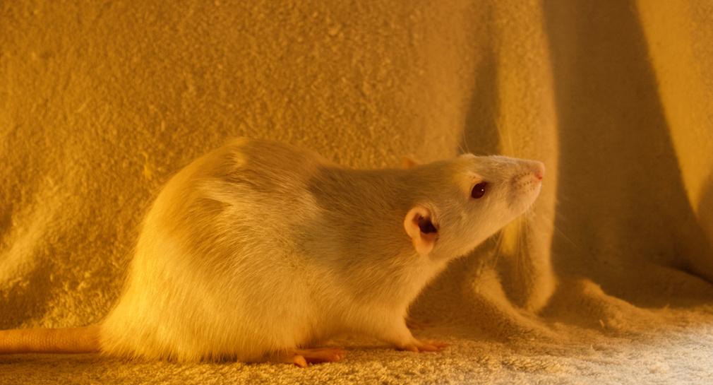 Les 3 p'tits rats - Page 17 Captur21