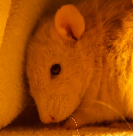 Les 3 p'tits rats - Page 17 Captur37