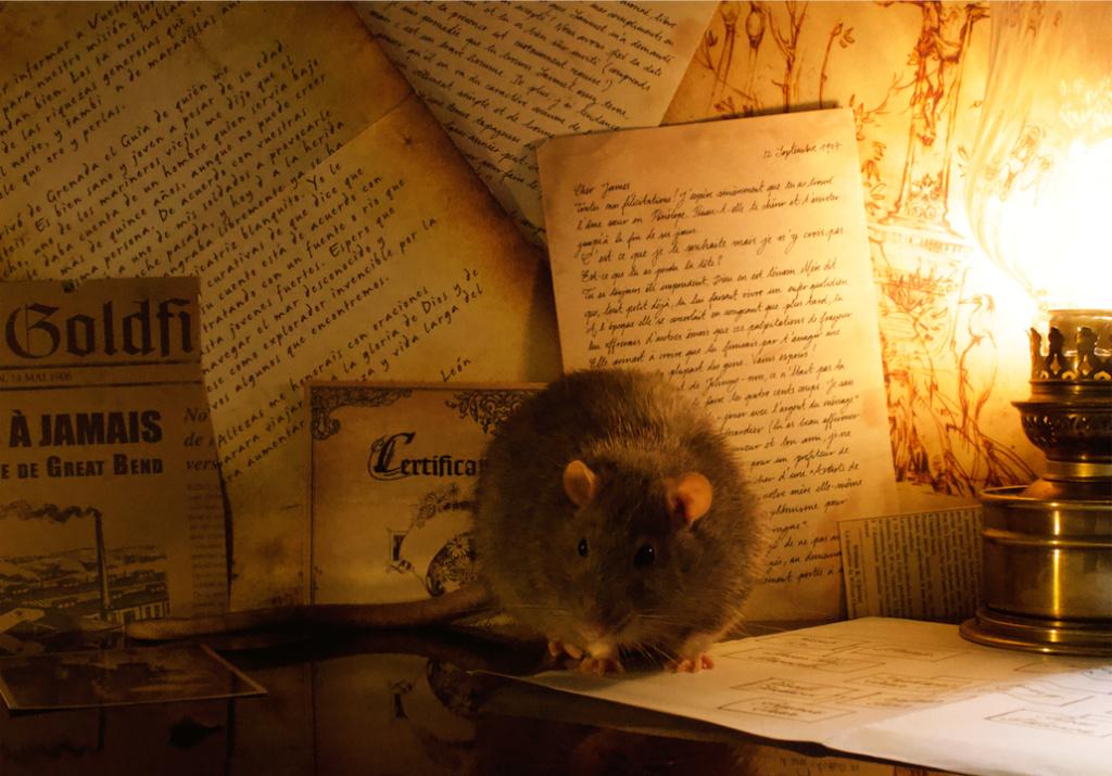 Les 3 p'tits rats - Page 17 Captur41