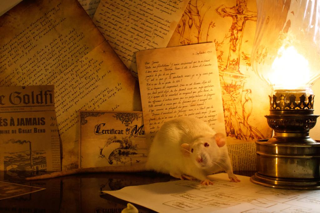 Les 3 p'tits rats - Page 17 Captur42