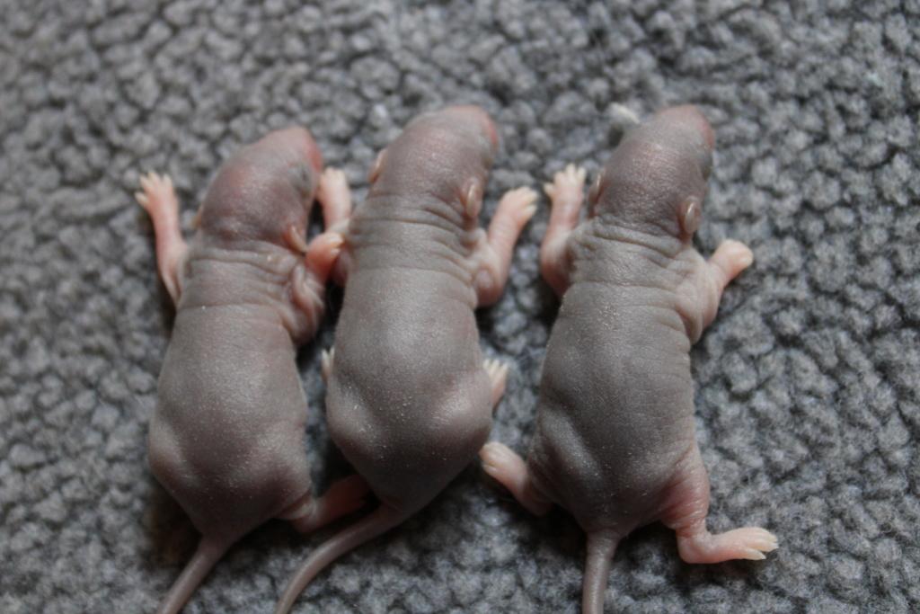 7 bébés du 04 juin Img_0630