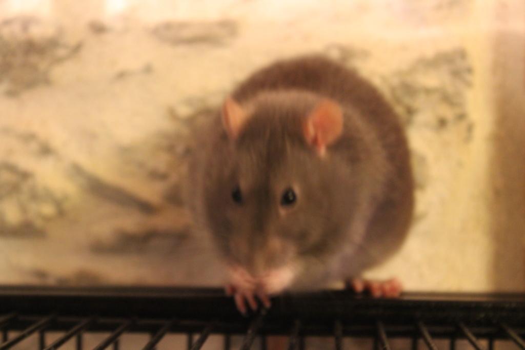 Les 3 p'tits rats - Page 16 Img_1510