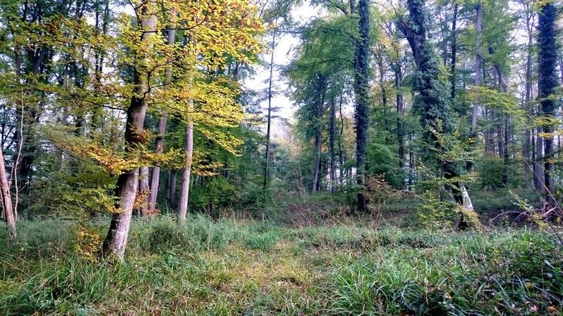 Sortie forêt de Retz (Aisne) - Page 2 Dsc_0114
