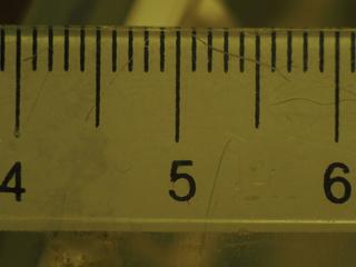 stab et macro avec bague sans contacts P5230410