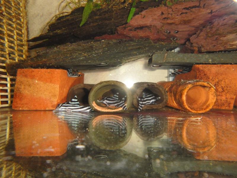 tubes de ponte (photos et liens) 17_02_10