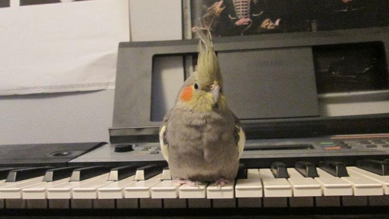 a tiny musician  Img_7017