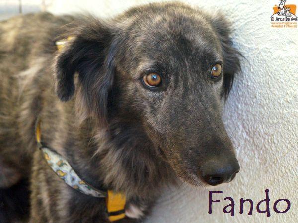 FANDO - ES (Sole)  Fando_10