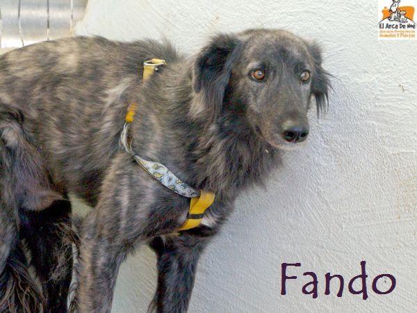 FANDO - ES (Sole)  Fando_11