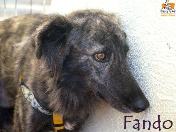 FANDO - ES (Sole)  Fando_12