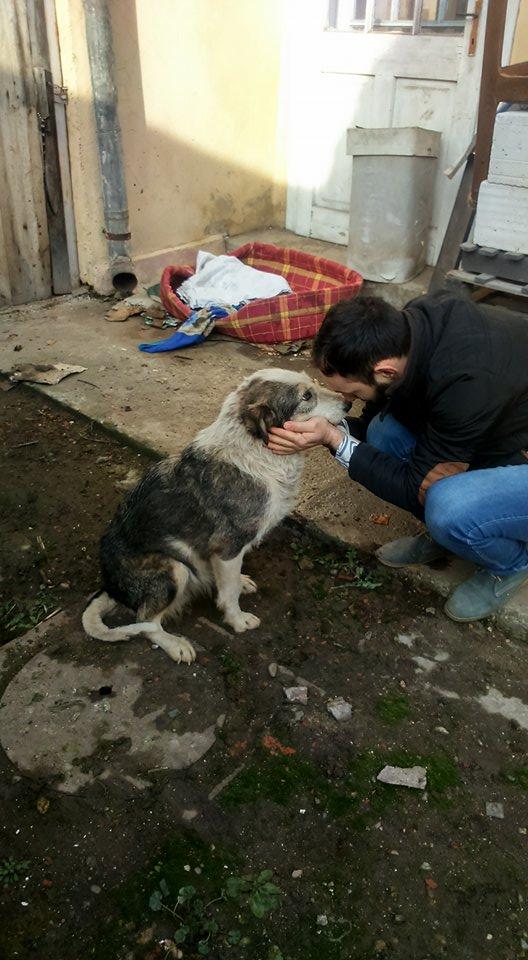 LORENA, F-X, née ?, 21KG (ORASTIE/Timisoara) A besoin d'urgence d'un traitement 26803610