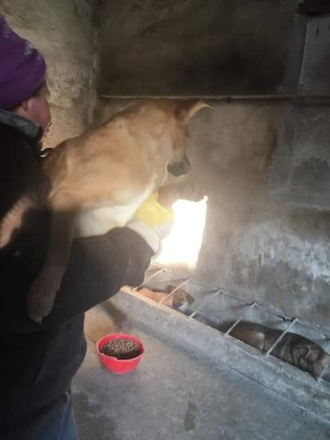 VICKY, F-X, née 2016, 6KG (ORASTIE/RUE) Pris en charge Refuge Pas si Bêtes Fb_i3701