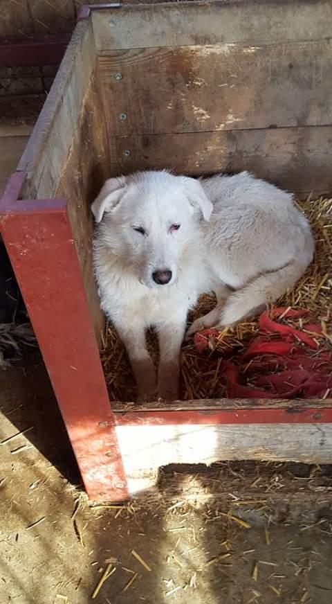 OSAWA, M-X, 16KG, né 2015 (FOURRIERE ORASTIE) - Adopté via Refuge GALIA Fb_i4757