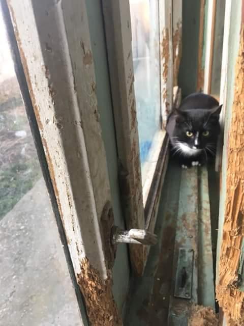 BLACKY chat noir & blanc ~08/2017 - ORASTIE - réservé karen claude Fb_i5147