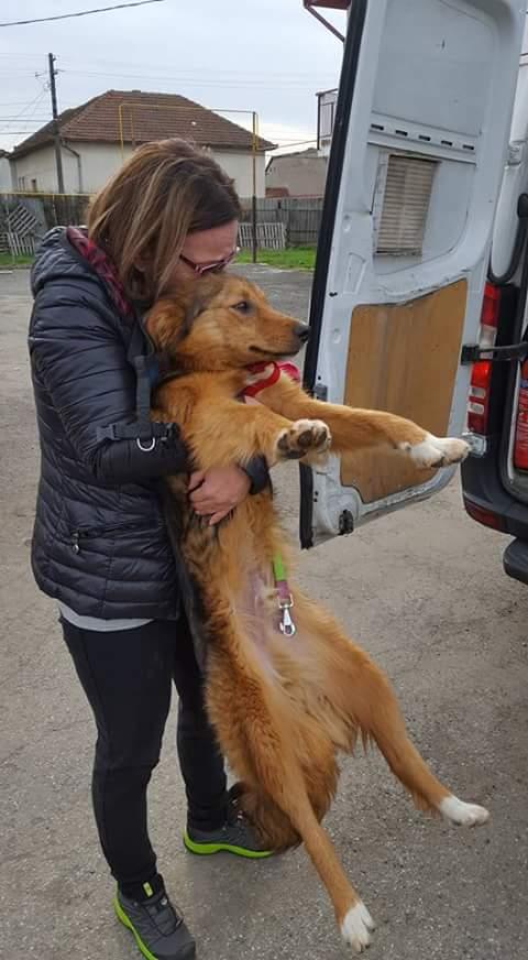 Arrivée par camion le 6 Avril 2018 ( chiens et chats ) - Page 5 Fb_i6284