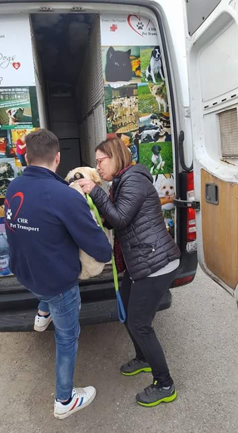 Arrivée par camion le 6 Avril 2018 ( chiens et chats ) - Page 5 Fb_i6285