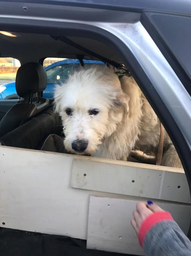 Arrivée par camion le 6 Avril 2018 ( chiens et chats ) - Page 7 Rece1479