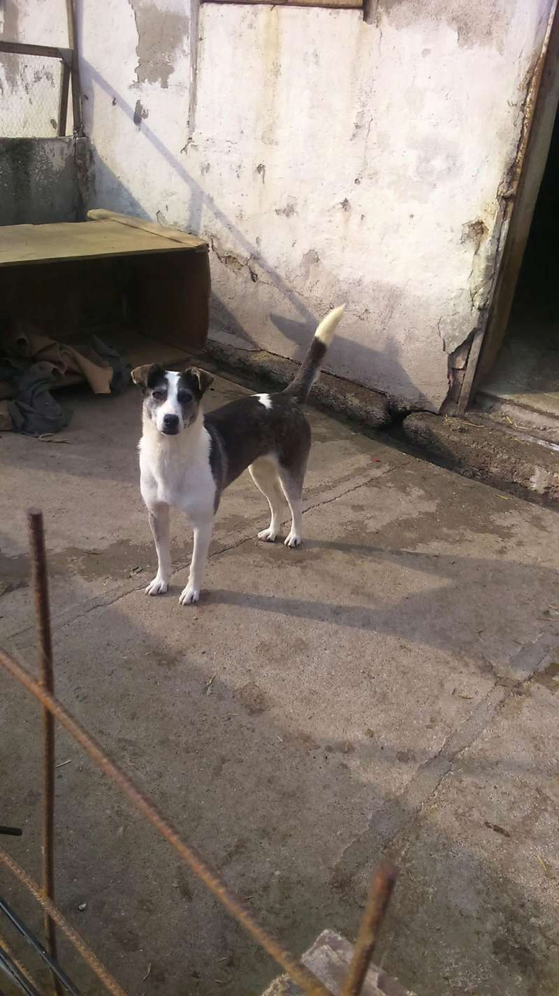 SOURY F-X, Née 2014 taille moyen 12 KG (ORASTIE/RUE)- Une très jolie chienne timide - - Page 2 Rece1637